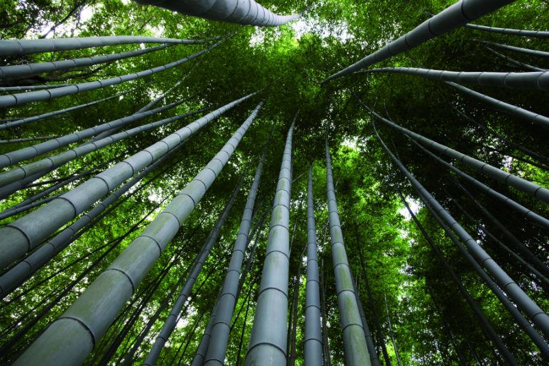 Vloerafwerking bamboe moso kennisbank biobased bouwen