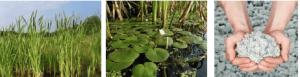 NPSP nuttig-hergebruik-biocomposiet-riet-waterplanten-cellulose