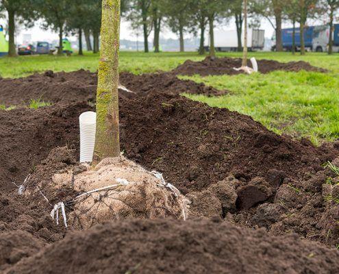 Een boom verankerd met keepers en biotouw. De keepers zitten in de grond en zijn niet meer zichtbaar.