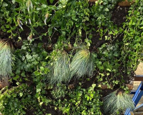 Holcim wand met planten proef