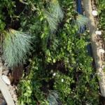 Holcim wand met planten